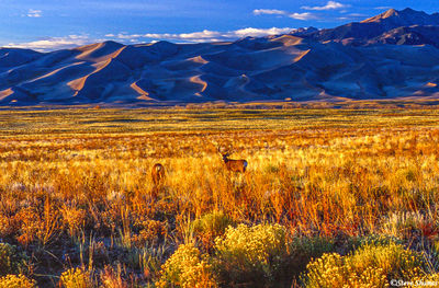 great sand dunes sunset, national park, colorado, deer