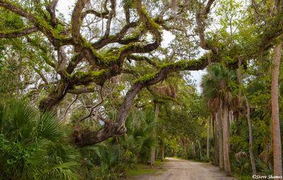 canaveral national seashore, florida, tangled tree branches