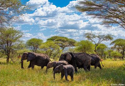tarangire national park, tanzania, elephant population