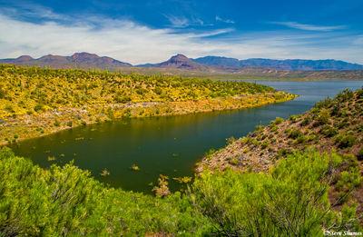 roosevelt lake, arizona, flowers, cactus