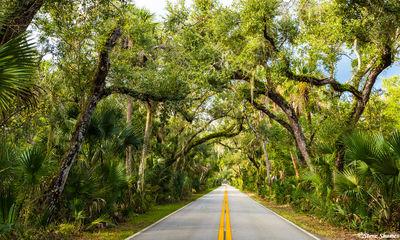 tomoka state park, florida, tree lined road