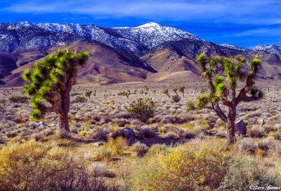 highway 395, southern california, desert scene