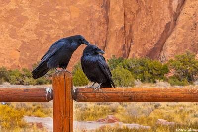 arches national park, utah, crows