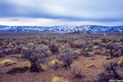 sagebrush, mountain ranges, nevada