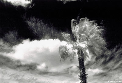 sacramento valley, california, palm tree