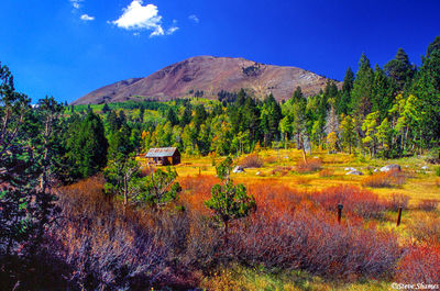 woodfords california, fall colors, carson pass highway