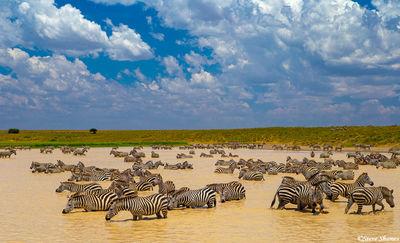 serengeti waterhole, zebras, tanzania