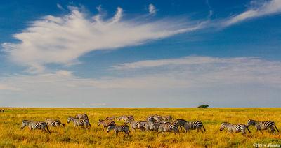 serengeti, national park, tanzania, zebras, african sky