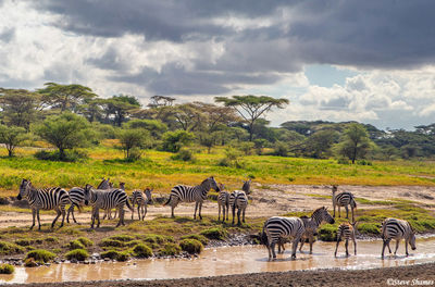 serengeti national park, tanzania, stormy sky