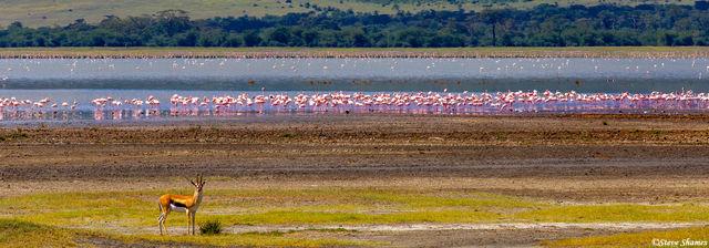 ngorongoro crater, tanzania, flamingos, thompsons gazelle