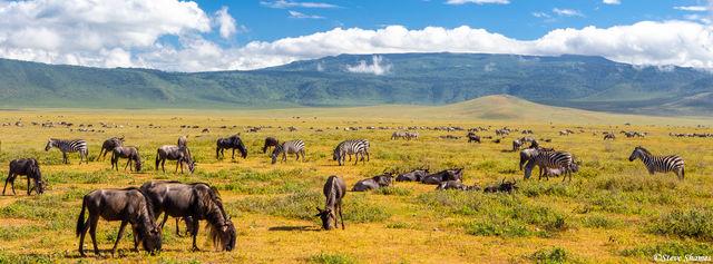 ngorongoro crater, tanzania, wildlife