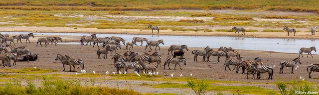 serengeti, national park, tanzania, zebra waterhole