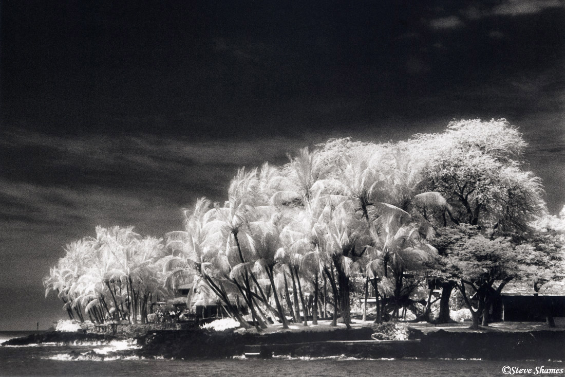 big island, hawaii, palm trees, captain cook, photo