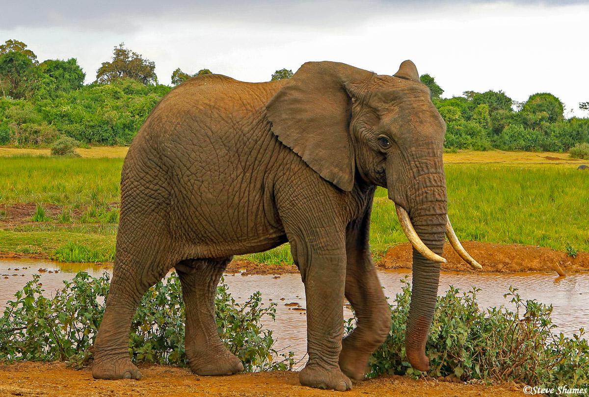 aberdare elephant, kenya, the ark, waterhole, photo
