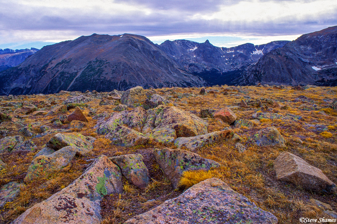 rocky mountain national park, colorado, above the timberline, colorful lichen, photo