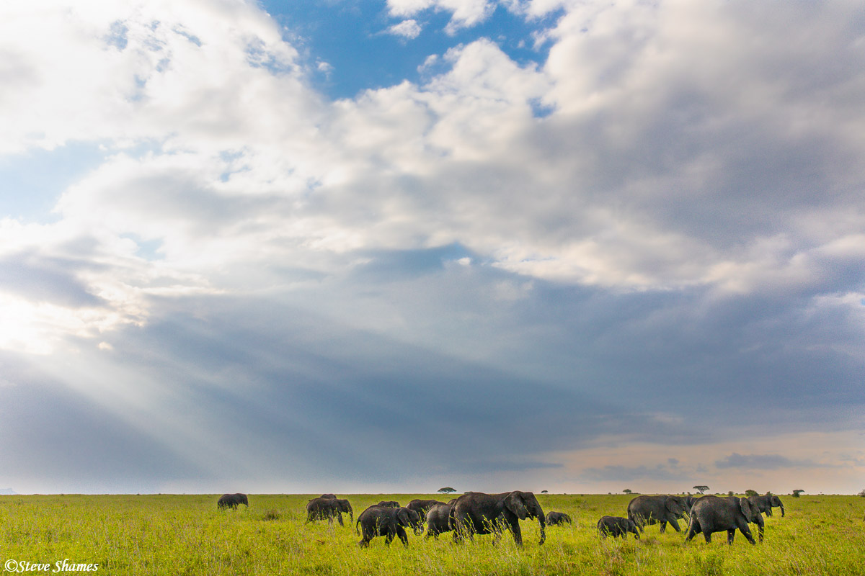 Dramatic African sky over elephants.