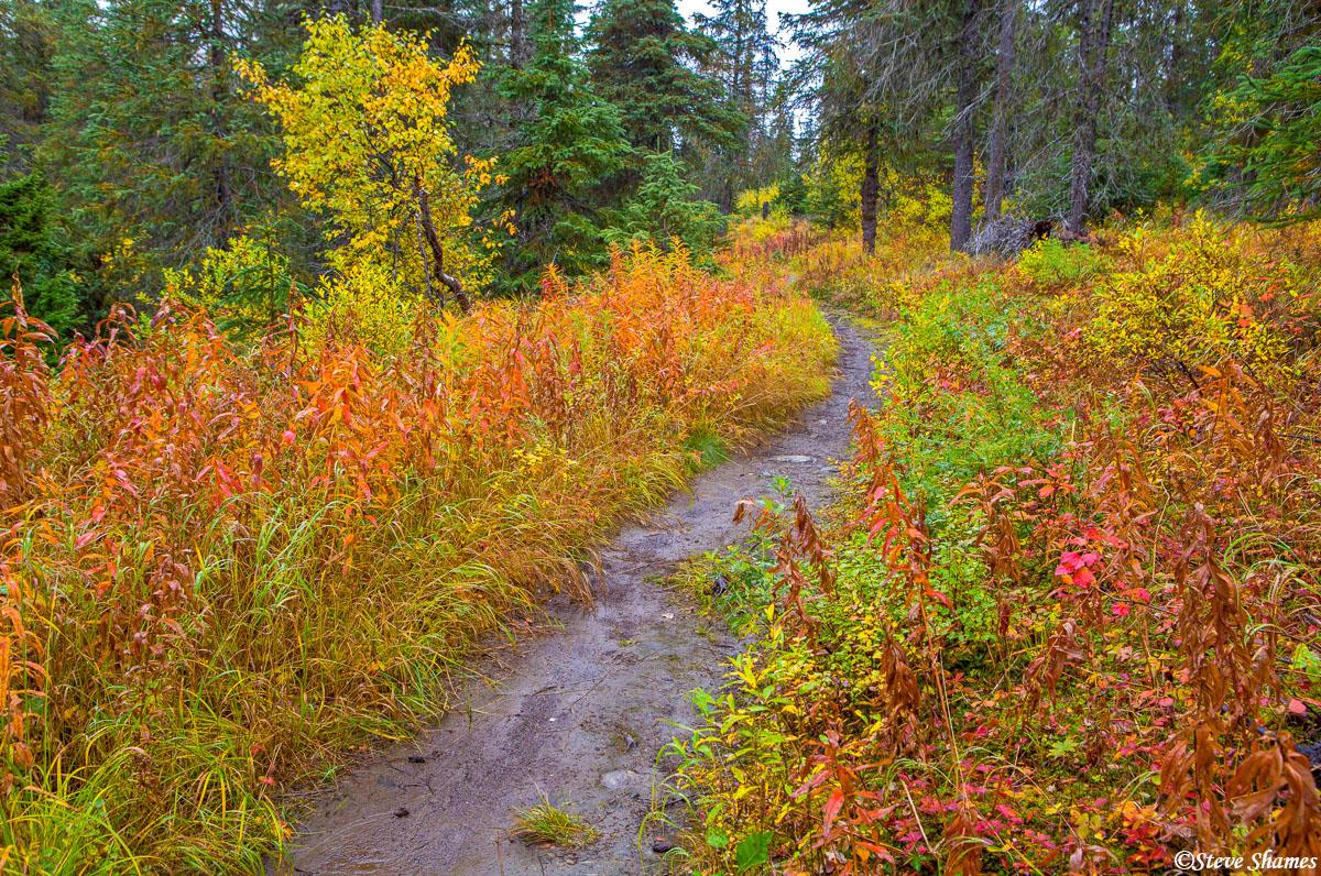 kenai peninsula, alaska, colorful trail, photo