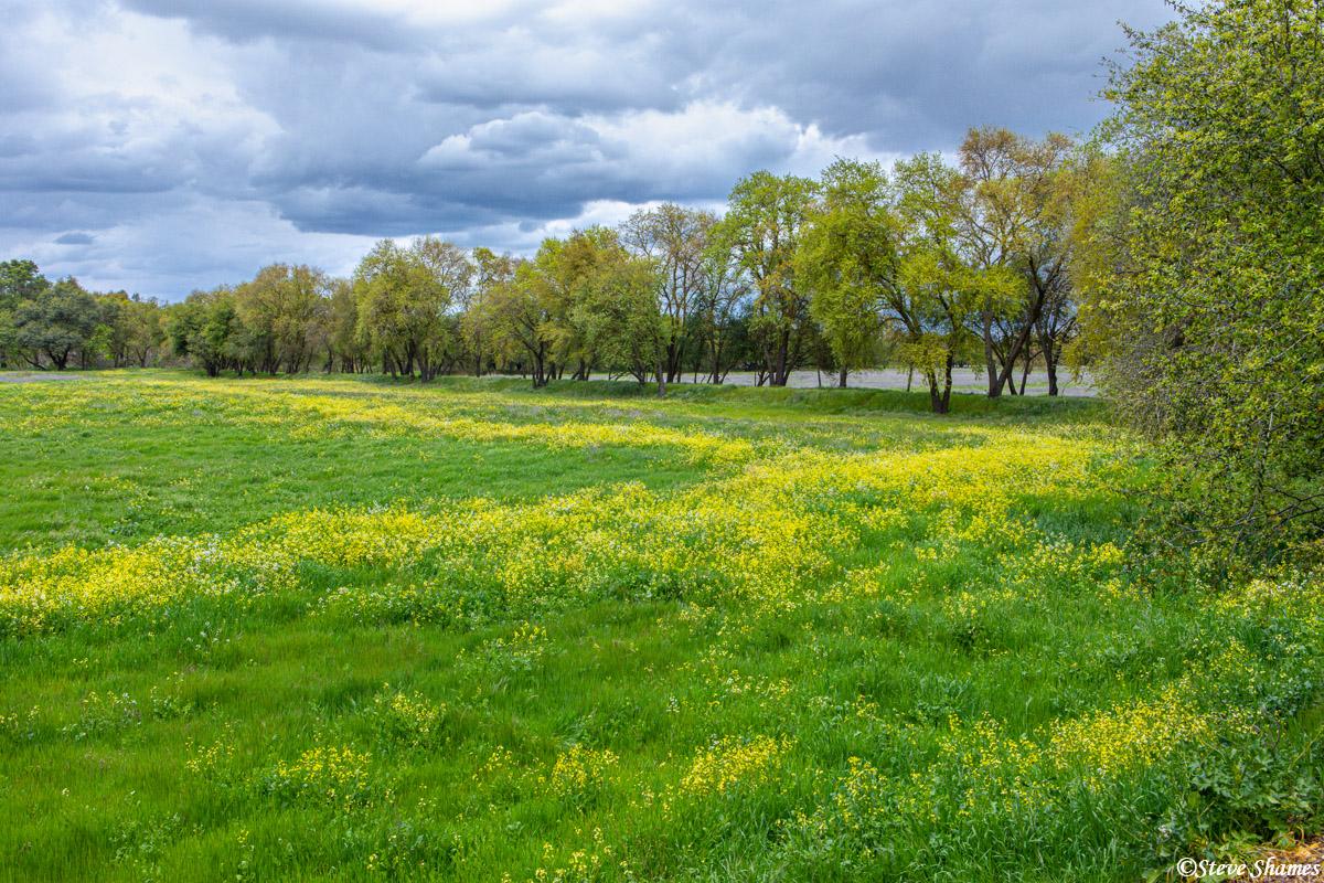 American River Parkway in spring bloom.