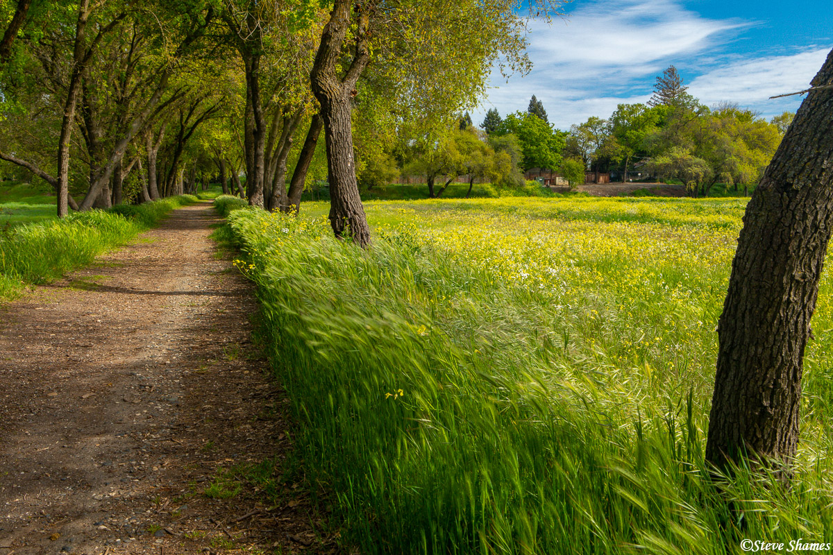 Along the American River Parkway in the spring.