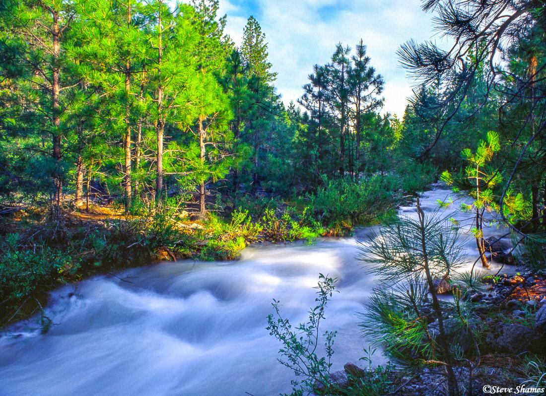 mt. shasta, northern california, babbling creek, photo