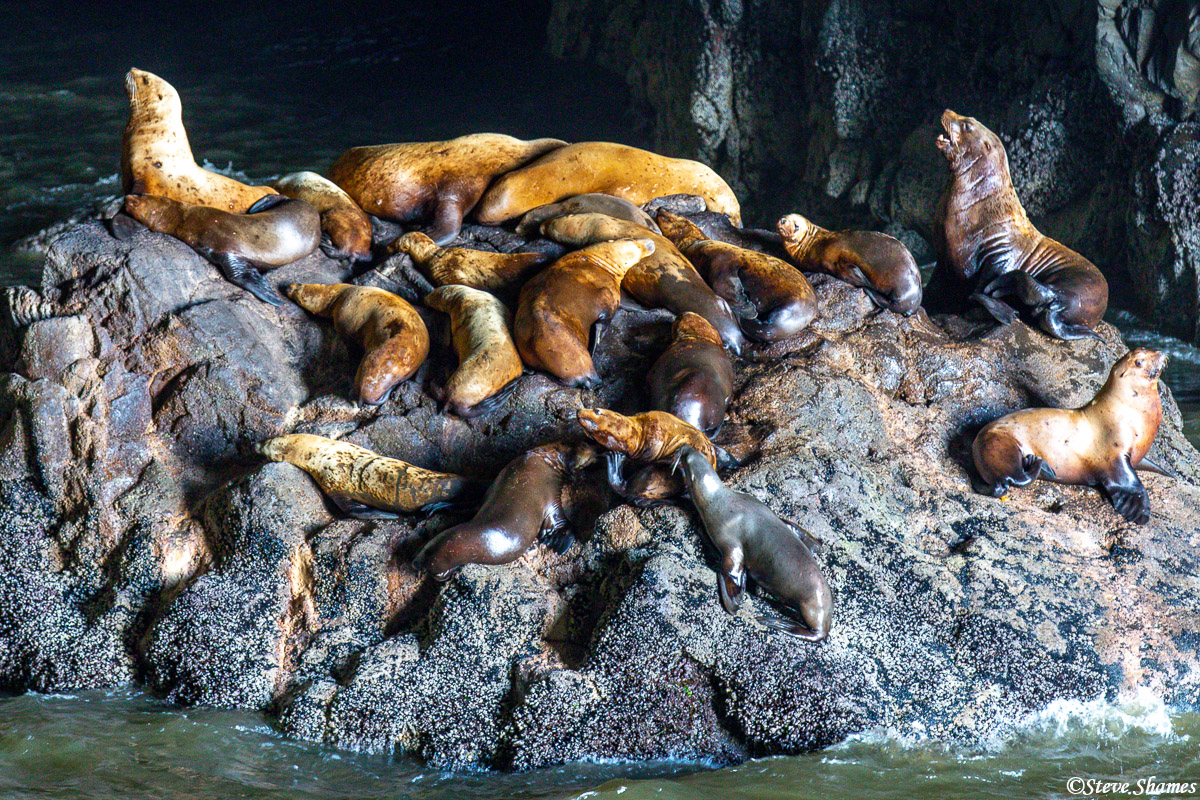 These sea lions were really barking up a storm.
