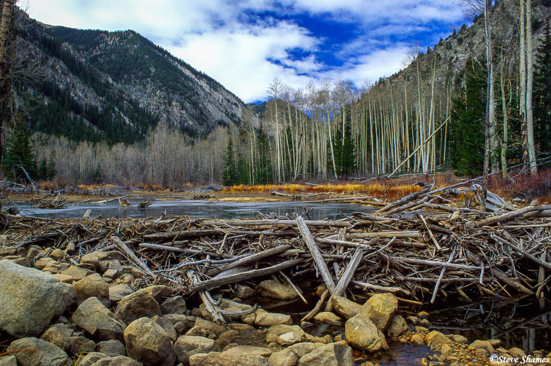rocky mountain national park, colorado, beaver dam, photo