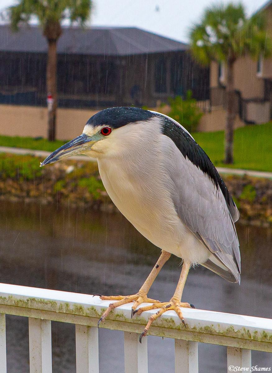 nokomis, florida, bird in the rain, photo
