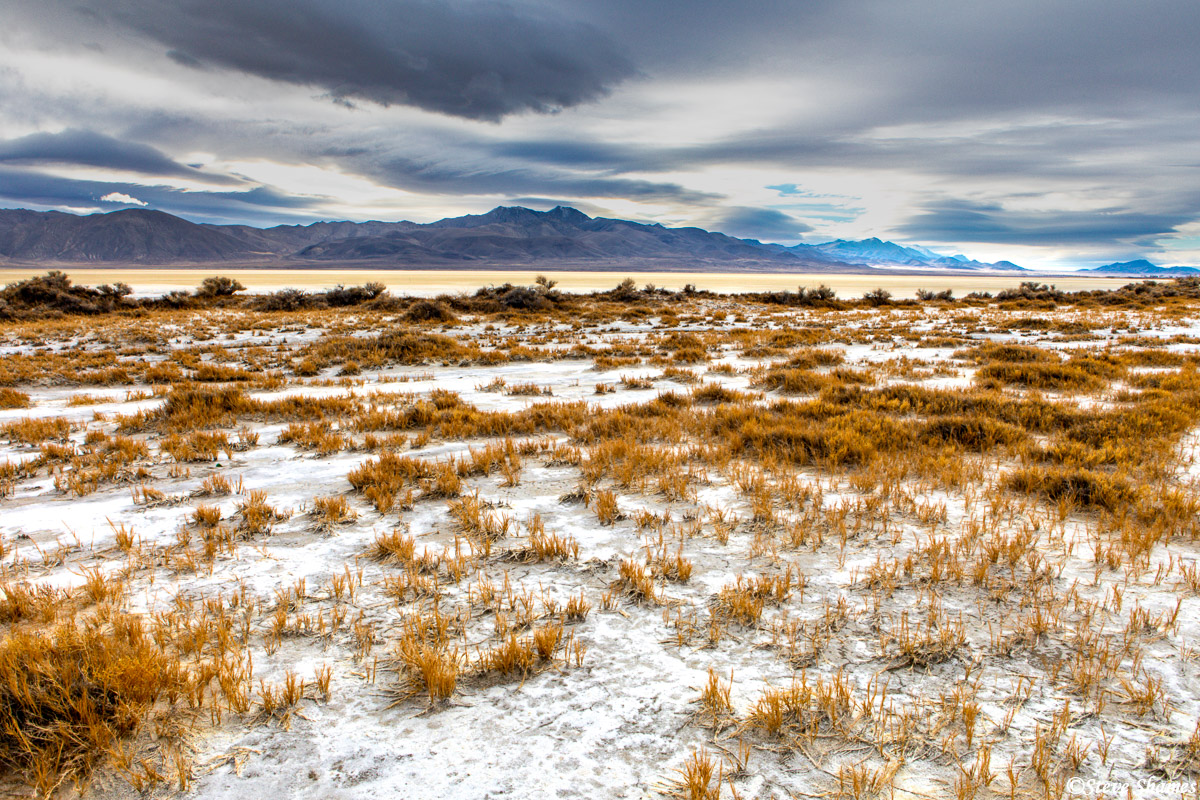 """The open flat areas where nothing grows is called """"The Playa"""", but there are spots on the side where vegetation takes hold."""