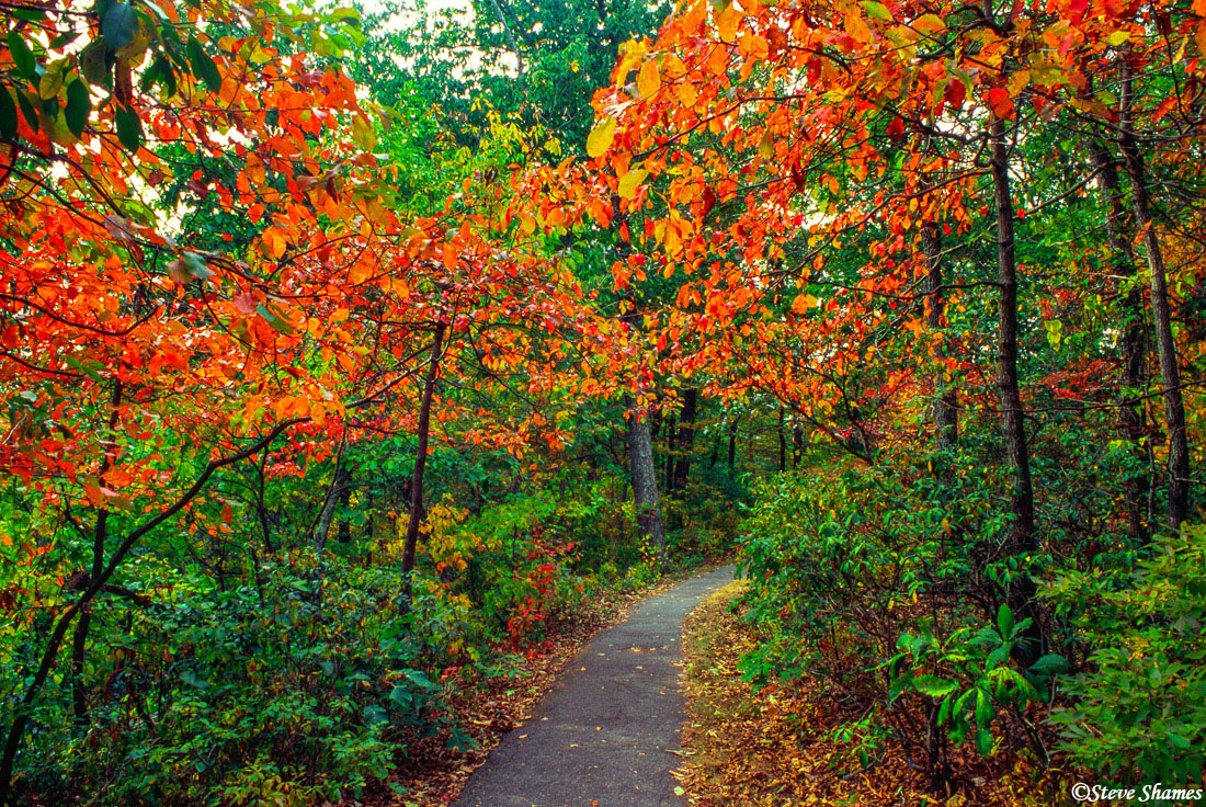 fall colors, blue ridge parkway trail, virginia, photo
