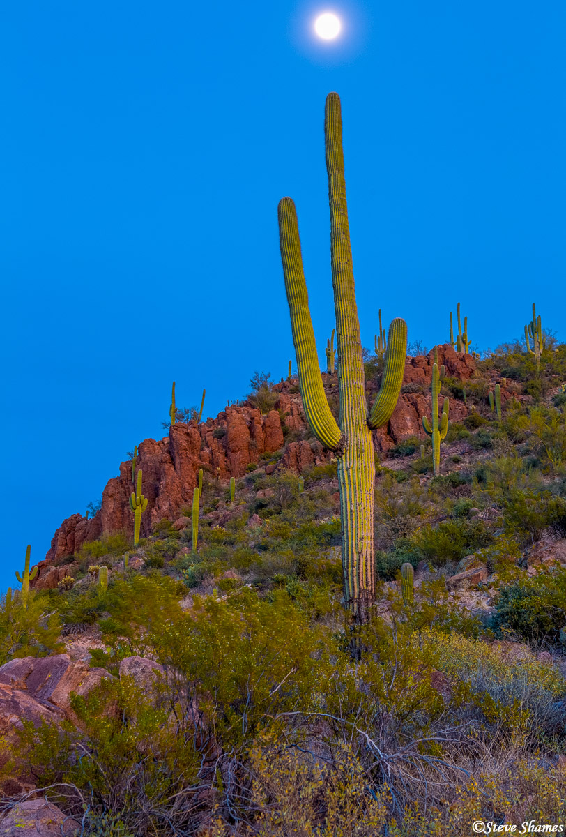 saguaro, cactus, national park, arizona, sunset, photo