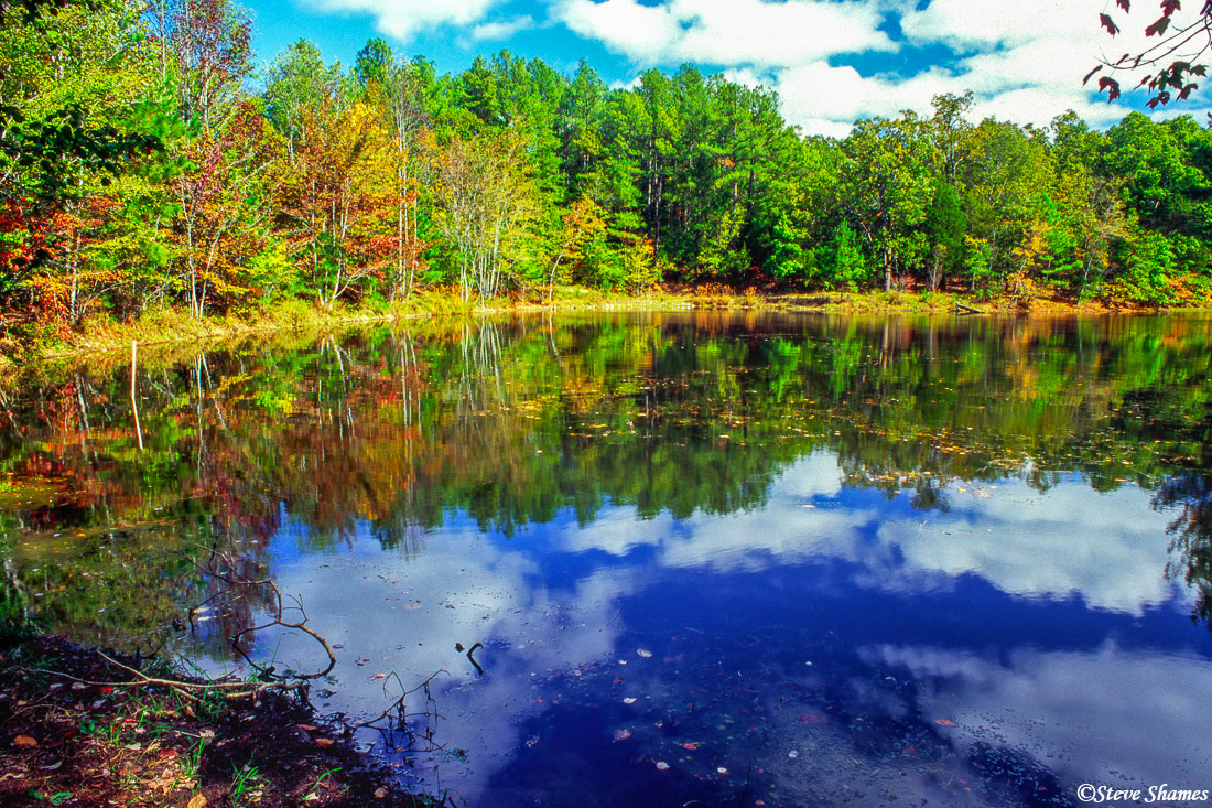 """Along the road known as """"The Trace"""" in """"The Land Between the Lakes"""" in Kentucky, was this nice looking pond."""