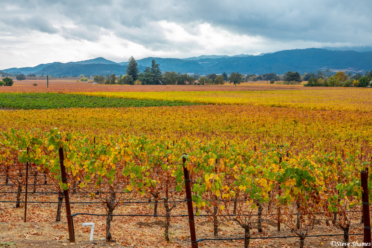 napa valley, vineyard, colorful, northern california, photo