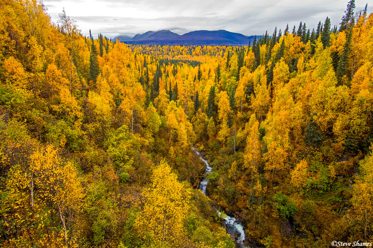 george parks highway, alaska, fall colors, photo