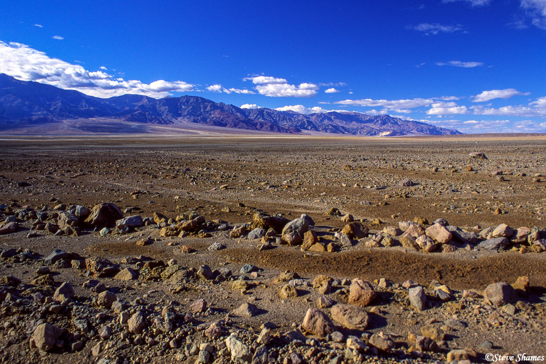 death valley, national park, bloom of 2005, photo