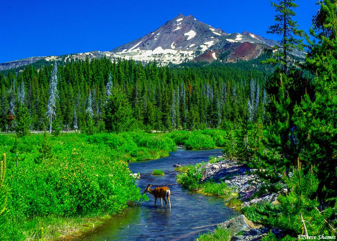 bend, oregon, deer, broken top mountain, photo