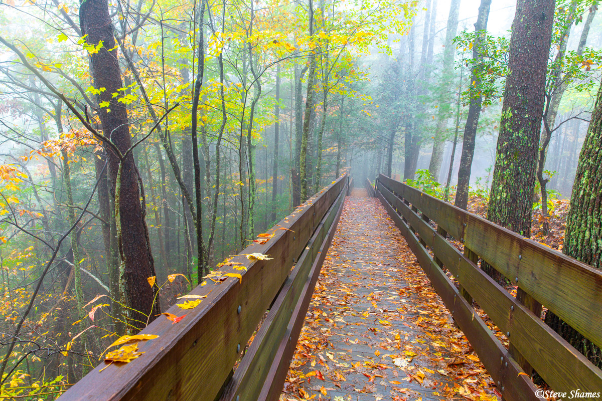 A boardwalk into the fog. This leads to the one mile trail down to Dukes Creek Falls.