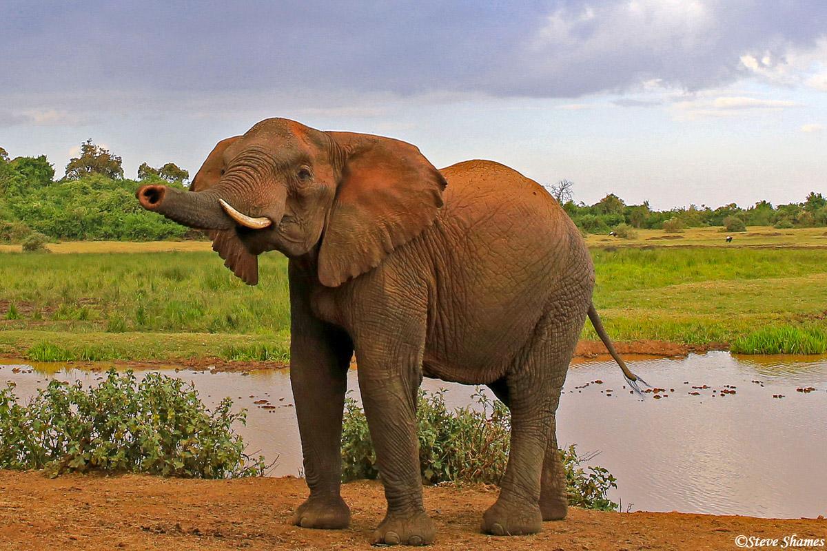 aberdare national park, kenya, elephant, the ark, photo