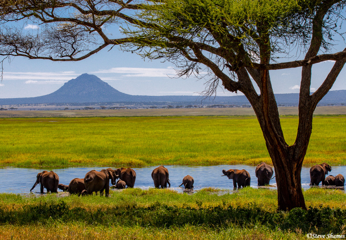 elephants in water, tarangire, national park, tanzania, photo