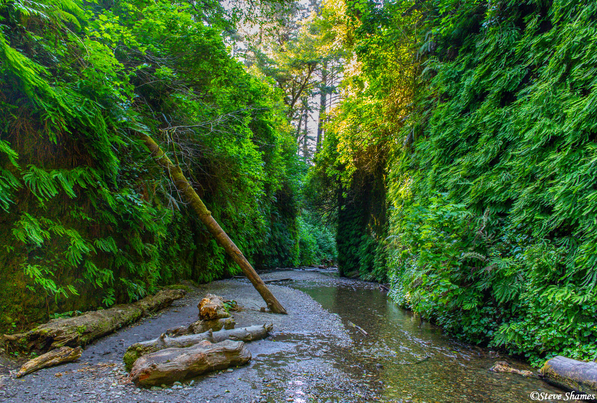 Amongst the redwood forests is an interesting spot called Fern Canyon. High straight walls of ferns gives it a unique and sort...