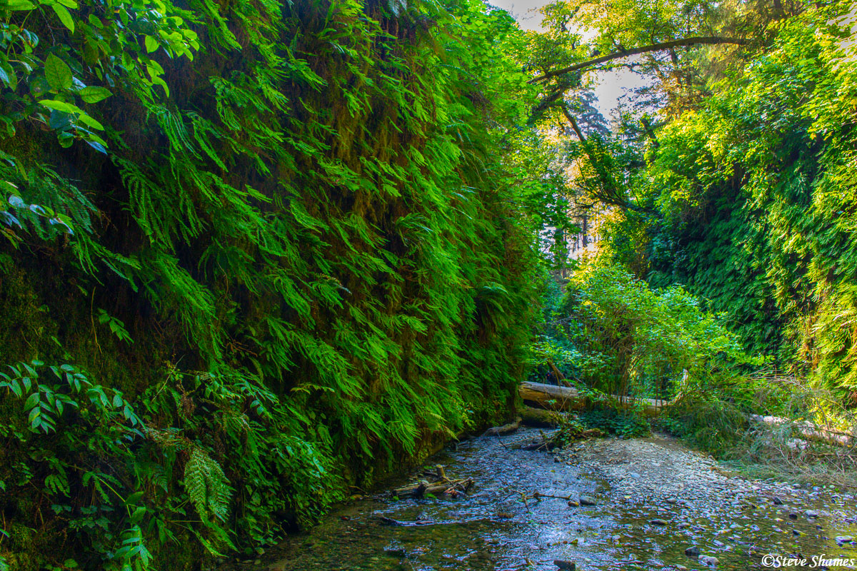 Another view of Fern Canyon with its straight up high walls of ferns.