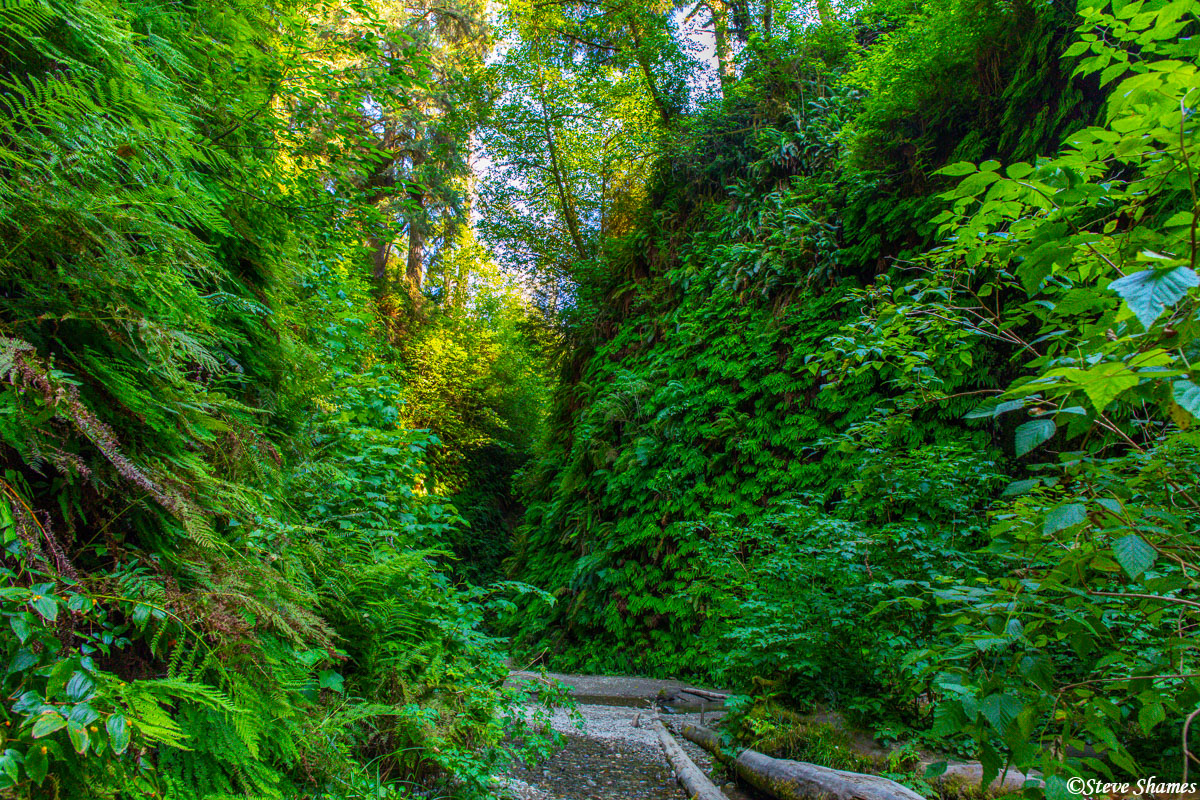 It was quite an interesting experience walking along the creek in Fern Canyon.