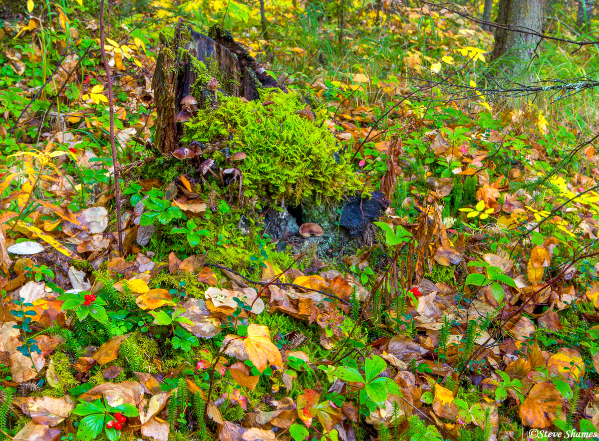 wasilla alaska, forest floor, photo
