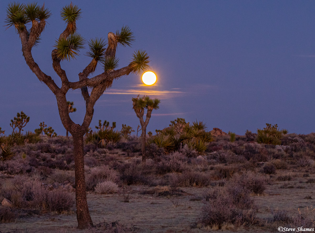 joshua tree, national park, southern california, full moon, photo