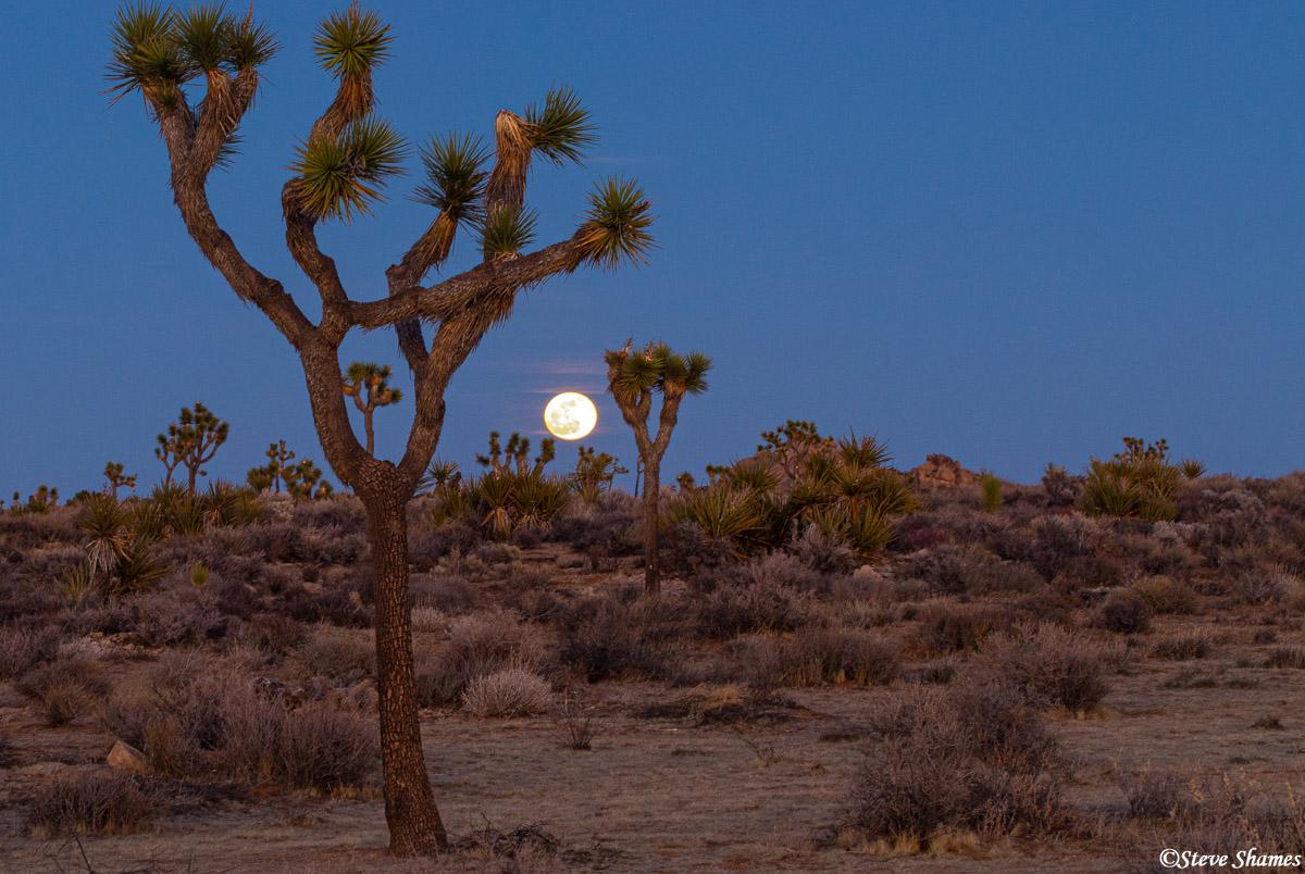 full moon rising, joshua tree national park, southern california, photo
