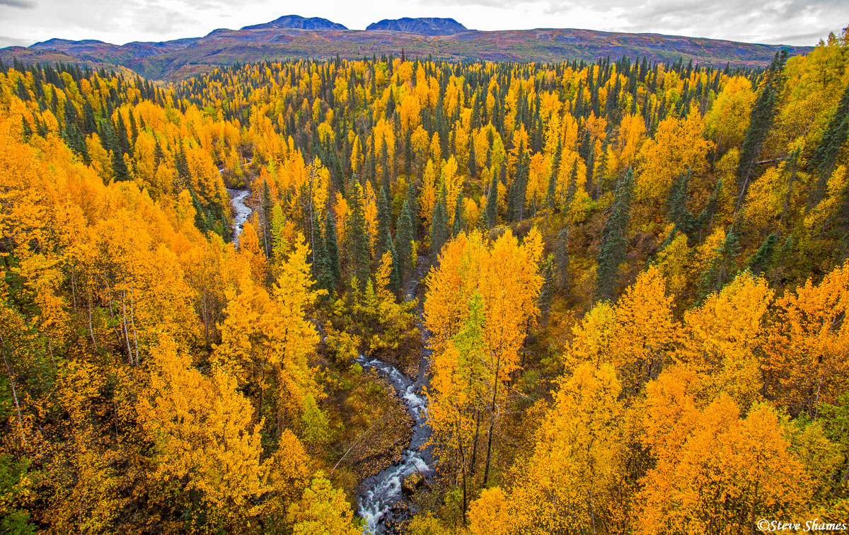 george parks highway, alaska, coal creek, patchwork of colors, photo