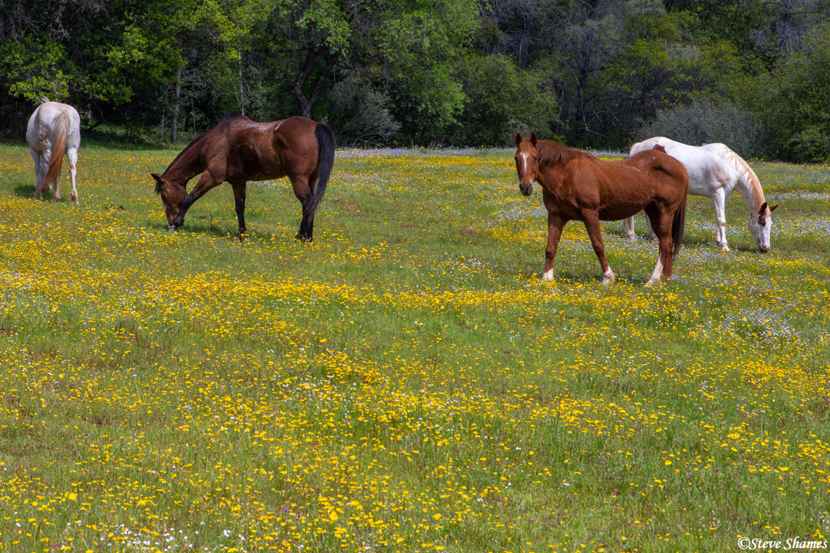 A colorful horse pasture in the countryside. This was in the Sierra foothills.