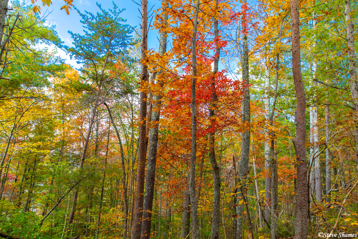 Beautiful fall colors in the mountains of north Georgia.