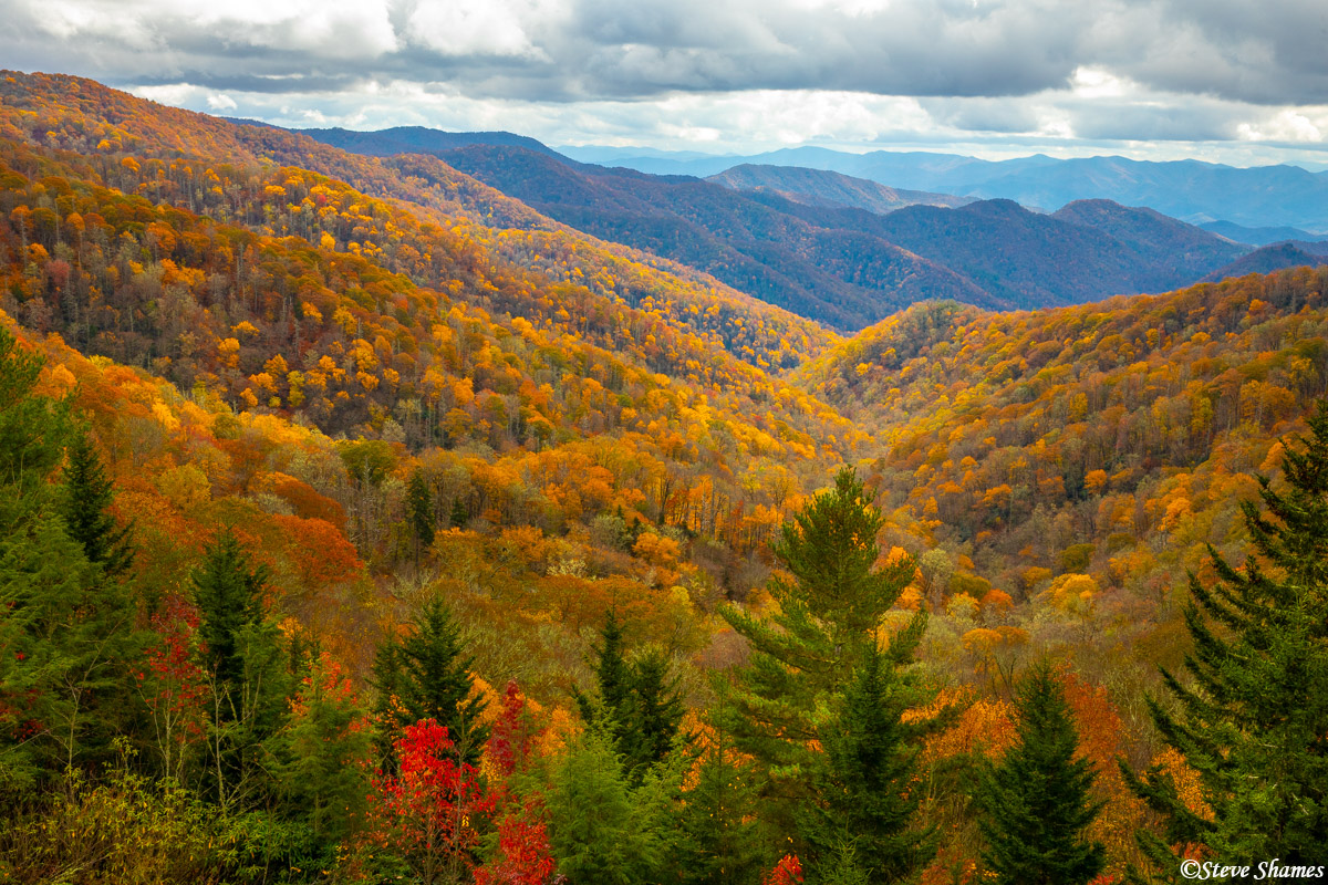Fall colors in the Great Smokey Mountains National Park. It is quite spectacular in places.