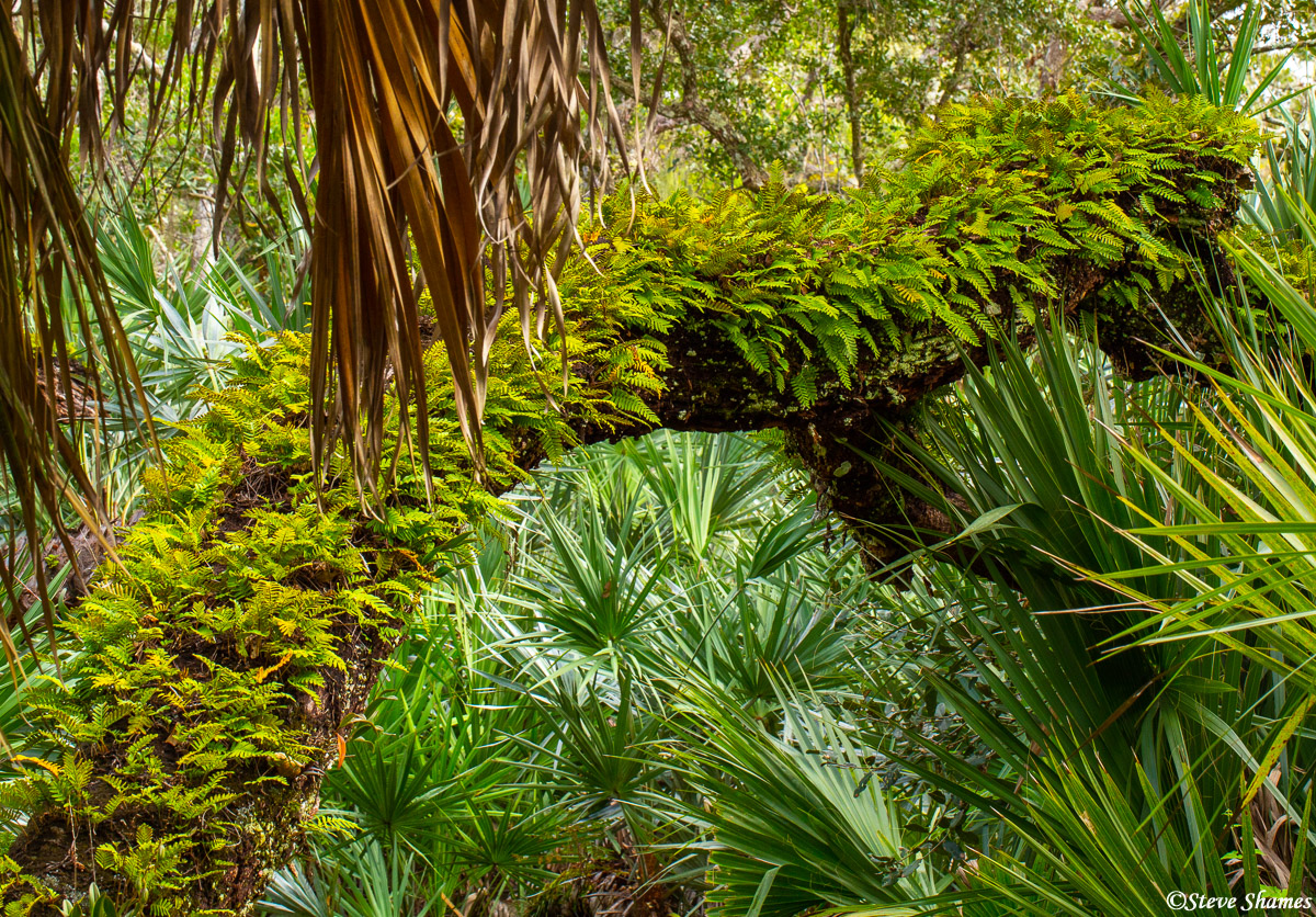tomoka state park, florida, thick vegetation, photo