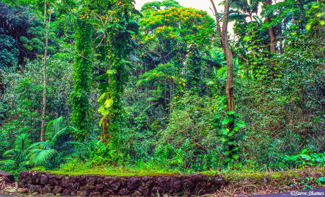 hilo, hawaii, big island, jungle, photo